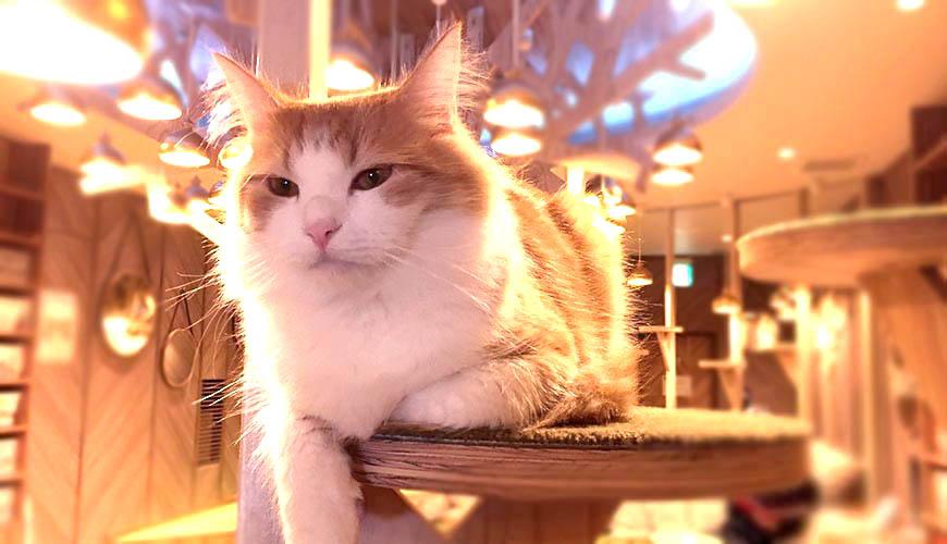 貓奴天堂!在貓咪咖啡廳「MOCHA 大阪心齋橋店」享受被貓貓包圍的幸福