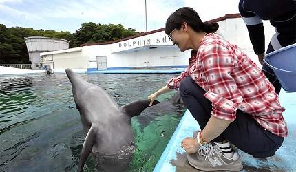 大阪近郊必去複合式動物遊樂園「岬公園」(みさき公園)實際觸摸海豚