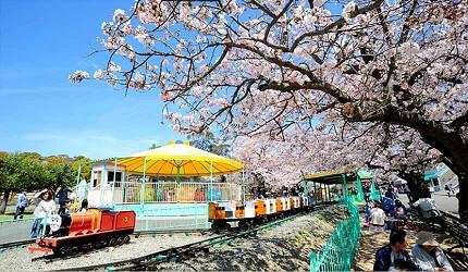 大阪近郊必去複合式動物遊樂園「岬公園」(みさき公園)是賞櫻知名景點