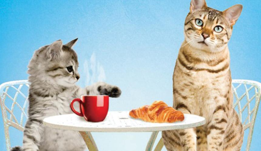 貓貓在喝咖啡吃牛角飽的照片