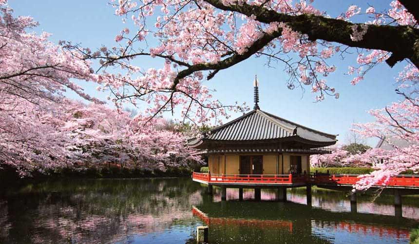 奈良日本國寶安倍文殊院櫻花景色