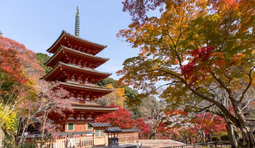 奈良櫻井市的大和國長谷寺秋天紅葉