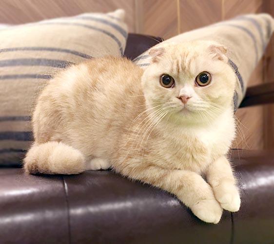 MOCHA 大阪心齋橋店店貓