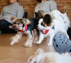道頓堀內的狗cafe的DOG TAIL內的狗在玩