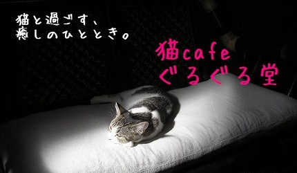 道頓堀鬧市中的猫cafeぐるぐる堂
