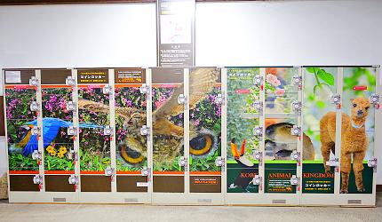 日本關西神戶必去景點「神戶動物王國」北出口的置物櫃