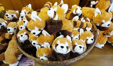 日本關西神戶必去景點「神戶動物王國」的小貓熊玩偶超可愛