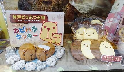 日本關西神戶必去景點「神戶動物王國」的水豚君餅乾超可愛