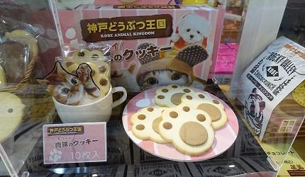 日本關西神戶必去景點「神戶動物王國」的貓肉球餅乾超可愛