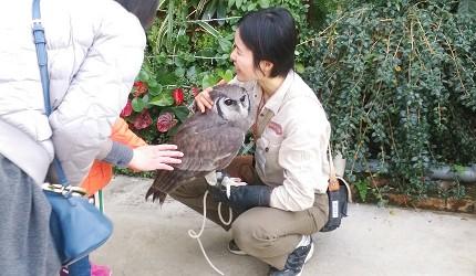 日本關西神戶必去景點「神戶動物王國」和貓頭鷹近距離接觸