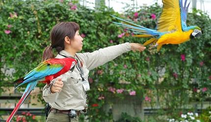 日本關西神戶必去景點「神戶動物王國」的禽鳥飛行秀