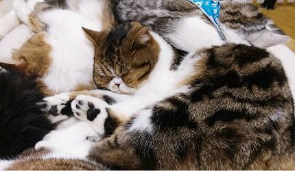 日本關西神戶必去景點「神戶動物王國」可愛動物貓咪