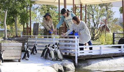 日本關西神戶必去景點「神戶動物王國」的企鵝點心餵食時間