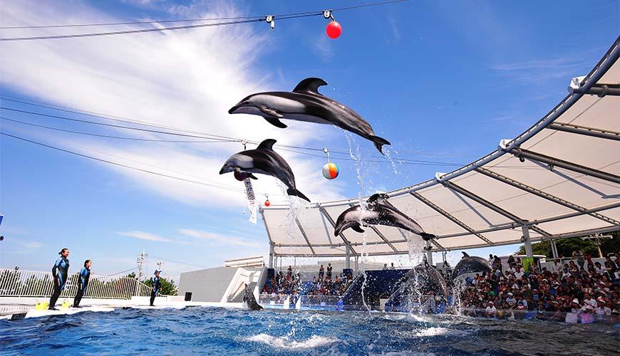 大阪近郊必去複合式動物遊樂園「岬公園」(みさき公園)!超讚海豚秀、還能餵食人氣水豚君