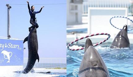 大阪近郊必去複合式動物遊樂園「岬公園」(みさき公園)的海豚秀