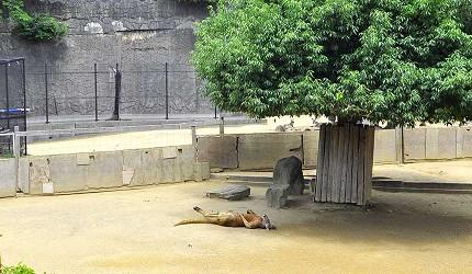 大阪近郊必去複合式動物遊樂園「岬公園」(みさき公園)裡的巨大袋鼠