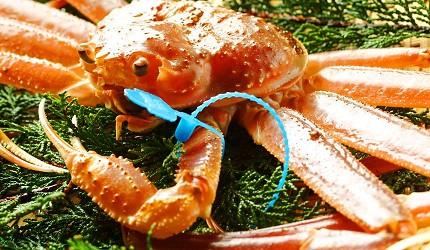 城崎日和山溫泉旅館「金波樓」有蟹中之王「津居山」螃蟹