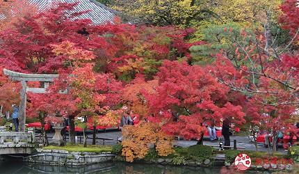 THE POCKET HOTEL 京都四條烏丸附近景點楓葉季
