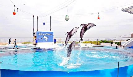 大阪近郊必去複合式動物遊樂園「岬公園」(みさき公園)海豚秀裡,海豚跳躍一景
