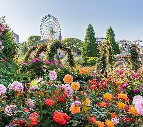 大阪推薦親子遊樂園「枚方公園」的春天賞花