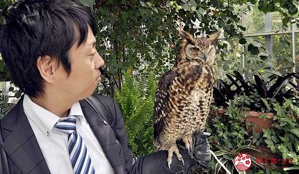 日本關西神戶必去推薦景點「神戶動物王國」的貓頭鷹近距離接觸