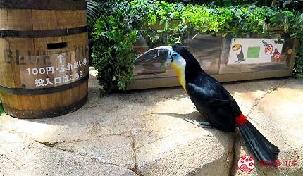 日本關西神戶必去推薦景點「神戶動物王國」的彩色大嘴鳥