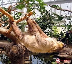 日本關西神戶必去推薦景點「神戶動物王國」的樹懶