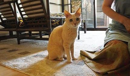 今井町的私房料理店猫COCO