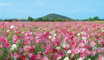 藤原宮跡美麗花園
