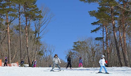日本關西北海道新潟滑雪自由行滑雪場推薦5選之一的ひるがの高原滑雪場的滑雪客人
