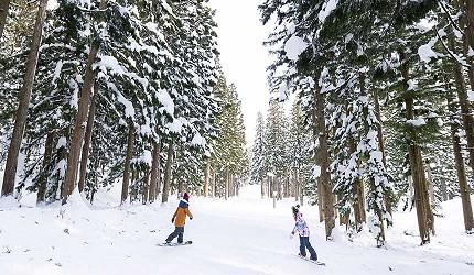 日本關西北海道新潟滑雪自由行滑雪場推薦5選之一的神立滑雪度假村的山林間滑雪道